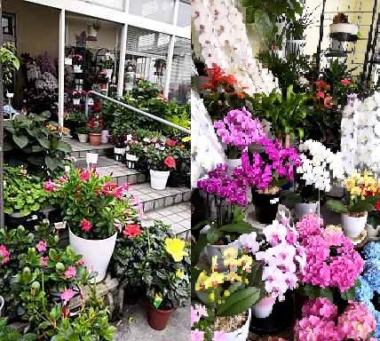 フラワーショップ 花竜の写真