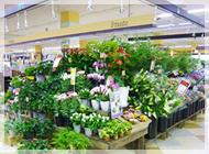IvY Flowers 西枇杷島店の写真