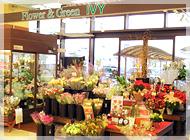 アイビー八田店の写真