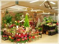 アイビー柴田店の写真