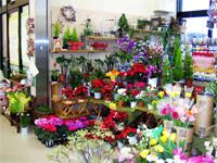 ぷっちぃ 久安店 (花街道支店)の写真